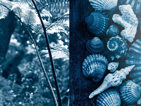 Collage about a trip to the South seas: jungle plants and sea treasures. Zdjęcie Seryjne