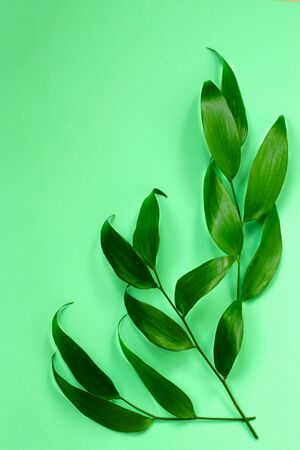 natural background: a branch with juicy green leaves on a green background
