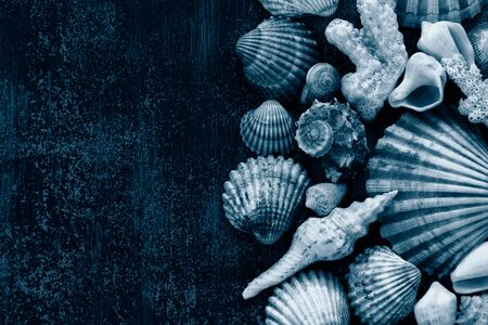 shells and corals on a dark wooden background. Horizontal format