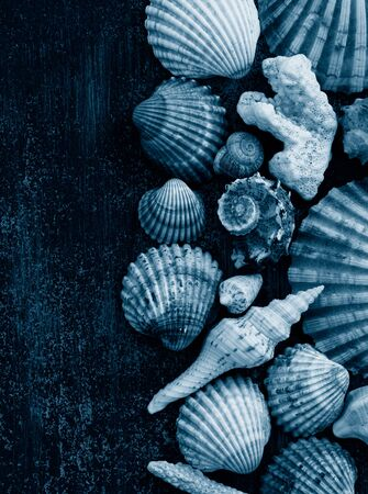 multicolored shells and corals on a dark wooden background, vertical format, social-media-ready