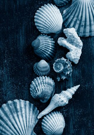 multicolored shells and corals on a dark wooden background. Vertical format, social-media-ready,
