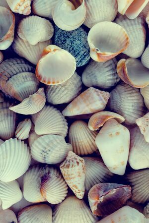 Shells found on the beach, a memory of a trip to the sea. Romance and relaxation. Delicate colors, monochrome.
