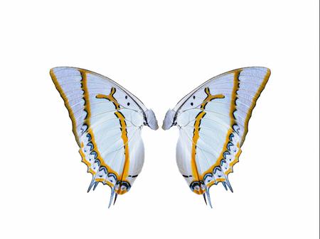 Ailes de papillon isolés avec un fond blanc Banque d'images