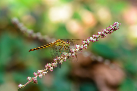 Beautiful dragonfly  on branch with colorful background.
