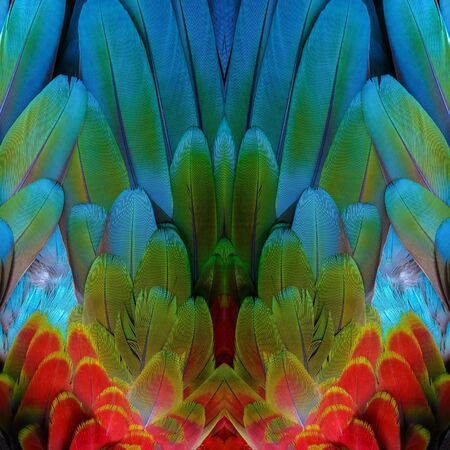 Beautiful pattern background texture made from Scarlet Macaw feathers.