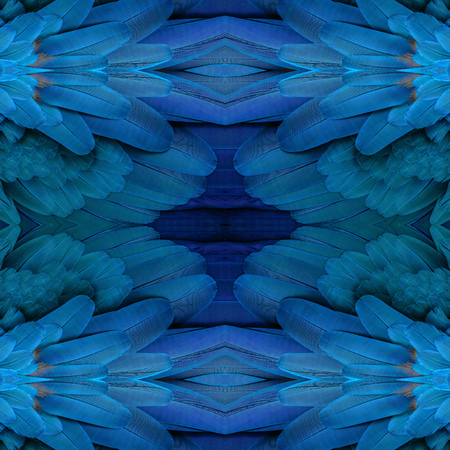 fascinate: Beautiful pattern background texture made from Beautiful pattern background texture made from blue and yellow macaw  feathers. Stock Photo
