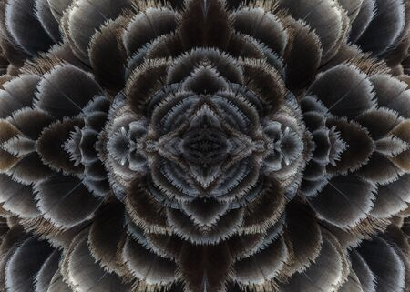 fascinate: Beautiful pattern background texture made from black swan feathers, cygnus atratus. Stock Photo