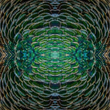 fascinate: Beautiful pattern background texture made from Green Peafowls feathers.