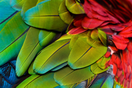 Close up of blue-and-gold macaw bird's feathers, exotic nature background and texture.