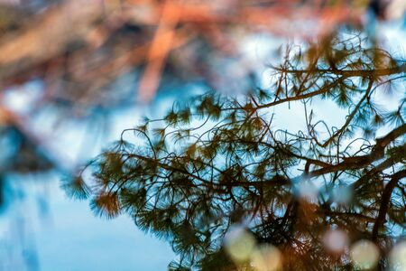 The reflection of sky and pine in the small puddle at Phu Kradueng National Park, a famous tourist destination in the northeast of Thailand. Imagens