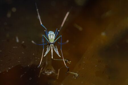Close-up of a mosquito on the surface of the wastewater. Standard-Bild