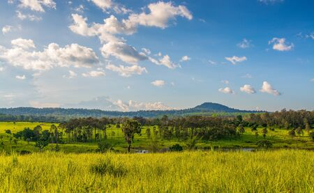Golden meadow and pine forest with blue sky as a backdrop, beautiful views of the Tung salang luang National park, famous tourist destination in Thailand.