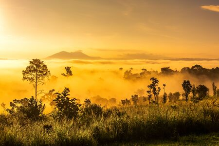 Beautiful sunrise in the morning above the meadow at Thung Salaeng Luang National Park, A famous local attraction in Thailand.