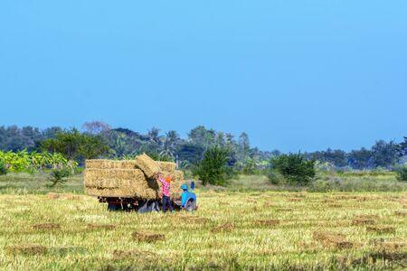 A Worker loading straw rice up on the truck at Phetchaburi, Thailand. Standard-Bild
