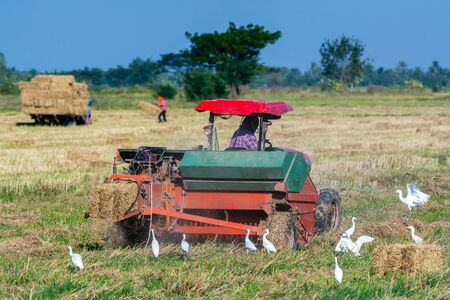 Farmers in Thailand are using tractors working in the rice fields.