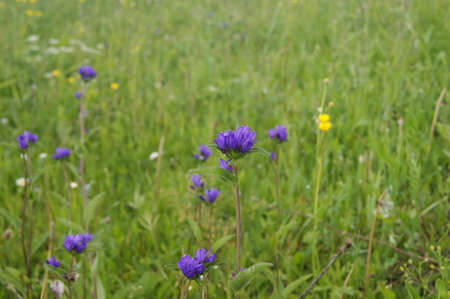 glades: wildflower Stock Photo