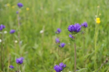 glades: wildflowers Stock Photo