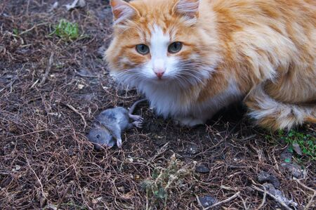 cat and mouse: cat, mouse