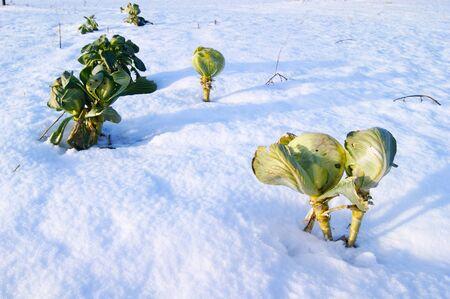 winter garden agriculture snow farming,