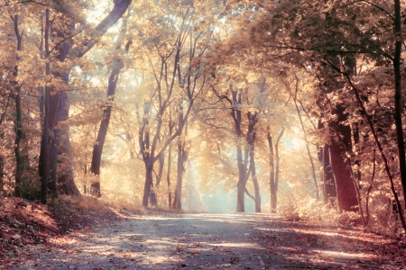 autumn road: Autumn trees in sunbeams, an autumn landscape