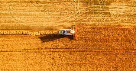 Harvester Maschine auf dem Gebiet arbeiten. Mähdrescher Landwirtschaft Maschine Ernte golden reifen Weizenfeld. Landwirtschaft. Luftaufnahme. Von oben. Standard-Bild