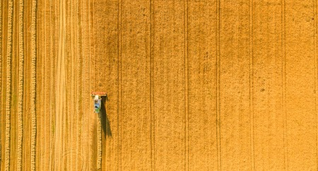 Harvester machine working in field . Combine harvester agriculture machine harvesting golden ripe wheat field. Agriculture. Aerial view. From above. Stock Photo