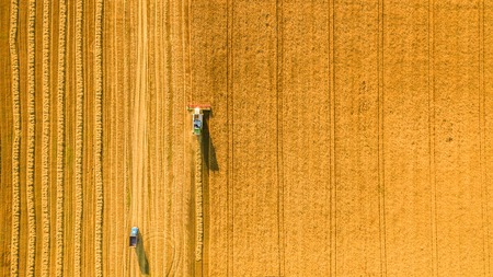 combine harvester: Harvester machine working in field . Combine harvester agriculture machine harvesting golden ripe wheat field. Agriculture. Aerial view. From above. Stock Photo