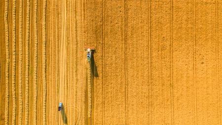 cosechadora: Máquina segadora que trabaja en el campo. Combinar campo de trigo cosechadora agrícola la cosecha mecánica de oro madura. Agricultura. Vista aérea. Desde arriba.