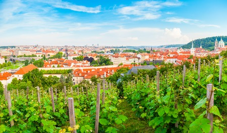 unesco in czech republic: Panorama of the old part of Prague from the Prague Castle with vineyards in the foreground. Old Town architecture, Czech Republic.
