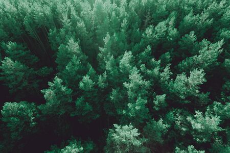 Beautiful panoramic photo over the tops pine forest. Top view Stock Photo