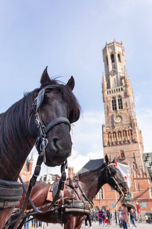 Belfort tower in Bruges at the Market Square with horses, Belgium. Stock Photo