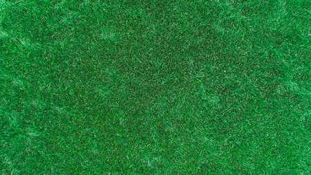Beautiful green grass texture.
