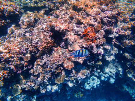 Carall reef of the red sea. Egypt