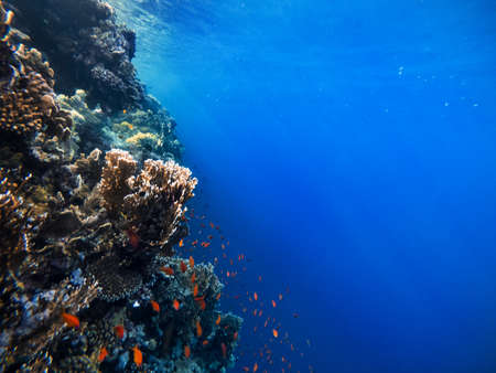 Underwater scene with coral reef in the Red Sea and rays of the sun shining through the water Banco de Imagens