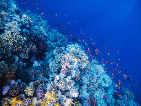 Underwater scene with coral reef in the Red Sea Banco de Imagens