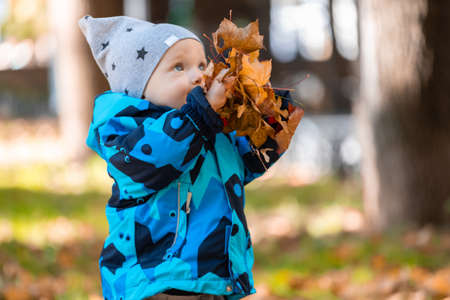 A little baby boy playing with colorful fallen leaves in the park in autumn. Banco de Imagens - 156832863