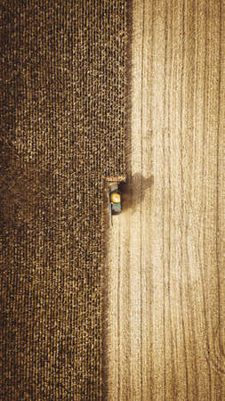 Harvester in the field collects corn in the fall. Autumn harvest.Agriculture. Aerial view. From above.