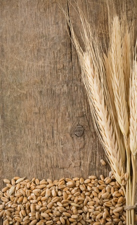 wheat grain and spike ear on wood background photo
