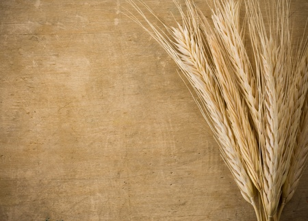 fascicle: ears spike of wheat on wood texture background