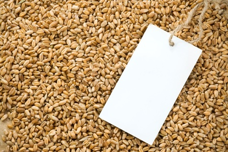 wheat grain and tag price photo