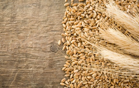 fascicle: wheat grain and ear on wood texture background