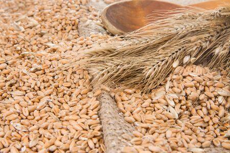 grain and wood spoon on sacking near spike photo