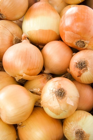 onion as gold background  Stock Photo - 12111938