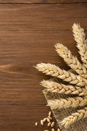 ears of wheat on burlap background photo