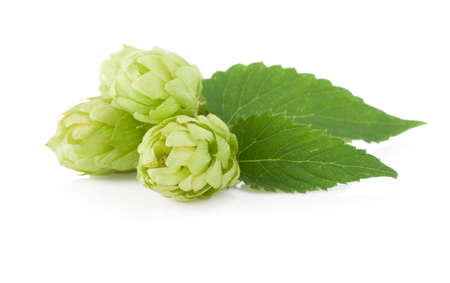 hop isolated on white background Stock Photo - 16123845