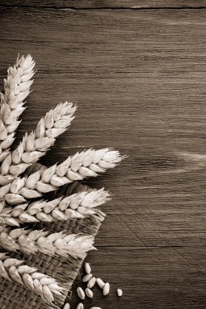 ears of wheat on burlap background photo