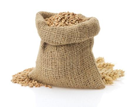 wheat grain: wheat grain isolated on white background