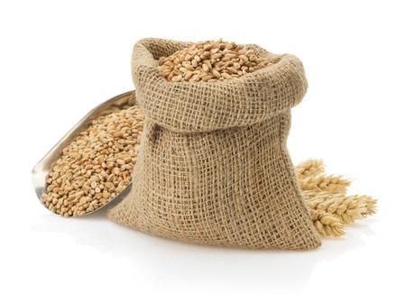 harina: grano de trigo aislado en blanco Foto de archivo