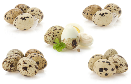 quail eggs isolated on white background photo