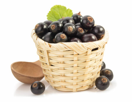 black currants on white background photo